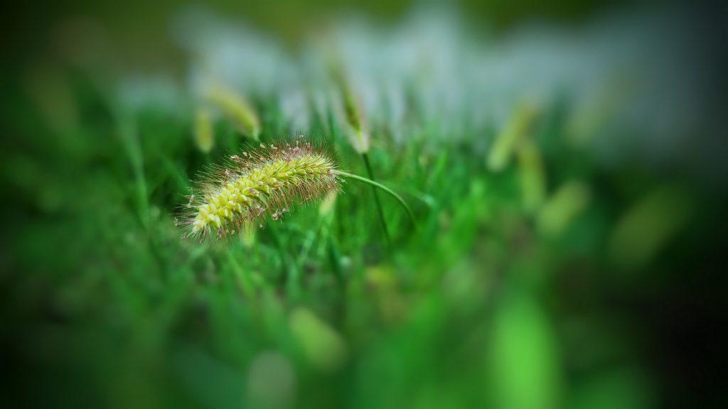Beautiful green grasses